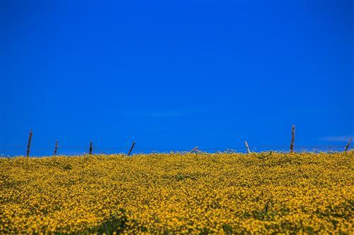 500 Primavera alla Badessa-0014 - Copia