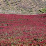 Primavera Cesarò Troina-0038
