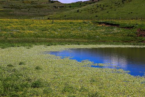 500 Primavera alla Badessa-0043 - Copia