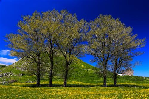 500 Primavera alla Badessa-0046 - Copia