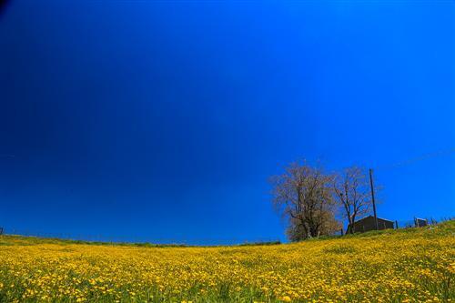 500 Primavera alla Badessa-0055 - Copia
