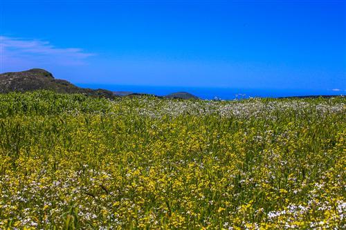 500 Primavera alla Badessa-0059 - Copia